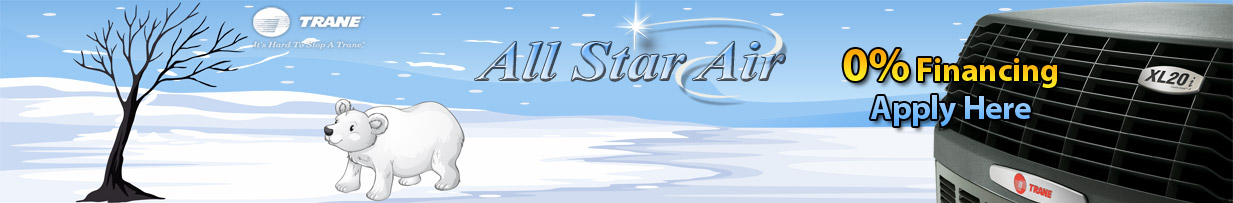 All Star Air Polar Bear
